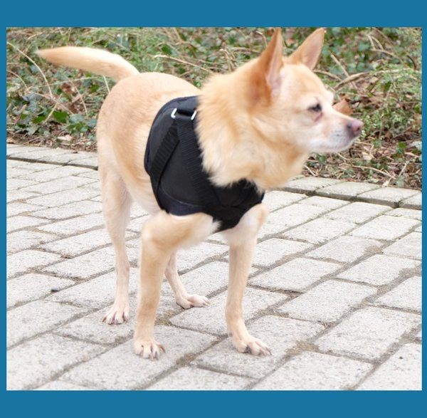 shoulder compression harness